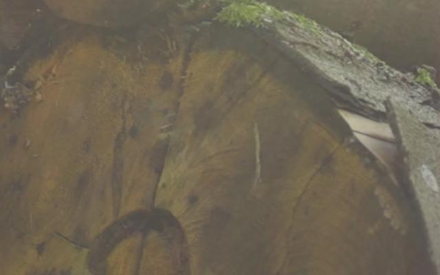 Wytham Woods Woodland Management