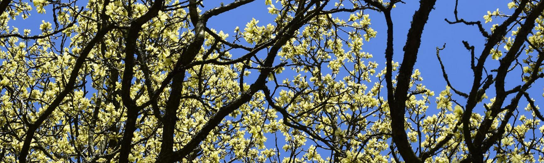 wytham spring walks