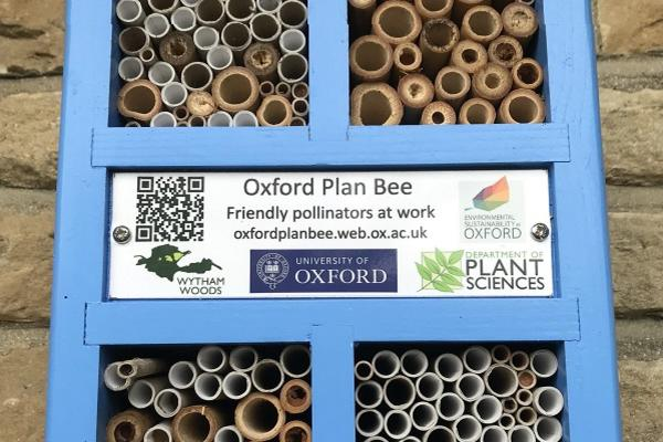 Oxford Plan Bee Nestbox